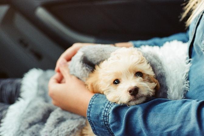 Recanto da Paz - Leve seu pet para viajar