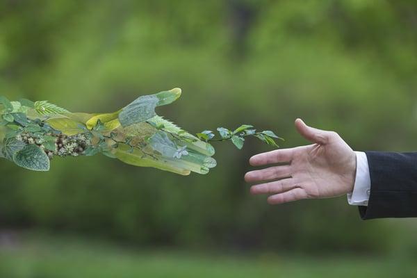 Recanto da Paz - Natureza