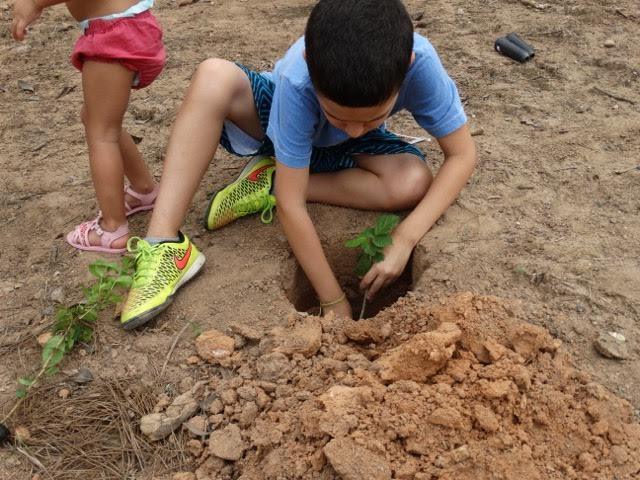 Projeto Recriar Árvore.jpg